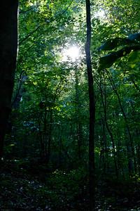 among_trees-5