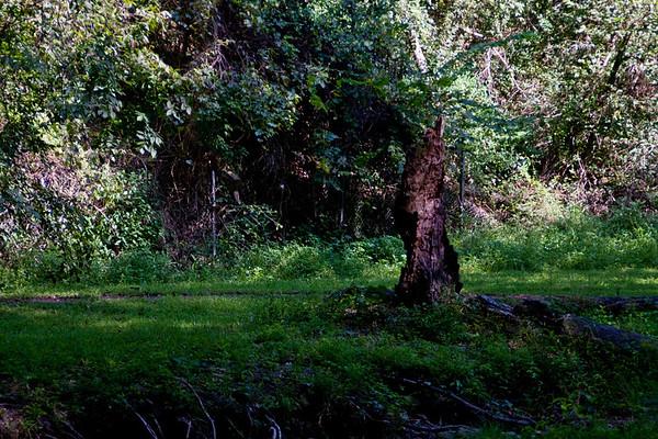 among_trees-3