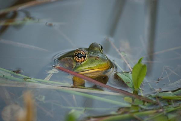 Amphibians-Reptiles