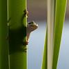 Amphibians 001