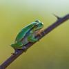 Amphibians 004