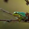Amphibians 005