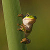 Amphibians 002