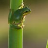 Amphibians 003