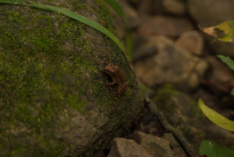 Frog (5)