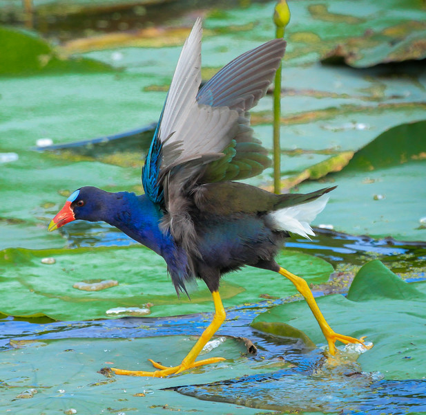 Tailwind pushing feathers forward