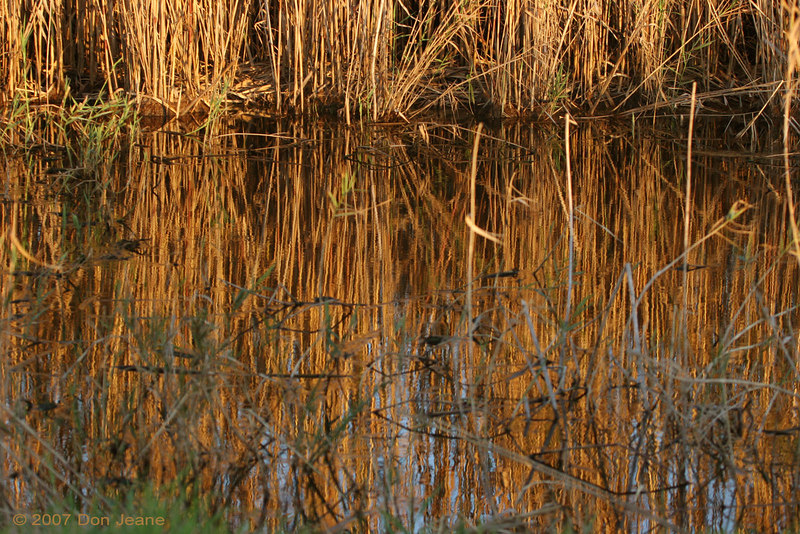 Shoveler Pond reflections - Jan, 2007.