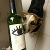 Checking out the wine