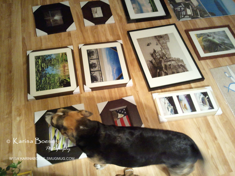 """""""Helping with the inspection... which photos should go to the gallery!"""""""