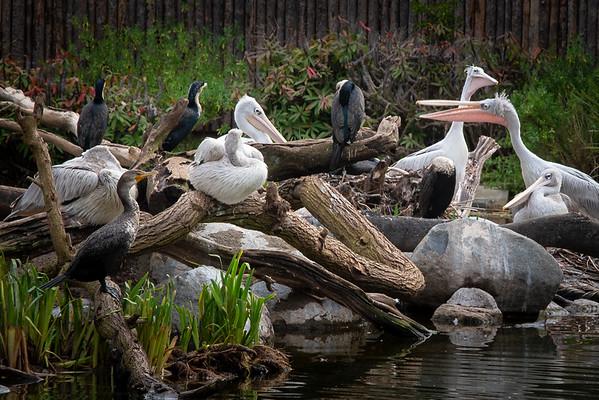 San Diego Zoo Safari Park.  Escondido, CA. February 15, 2019