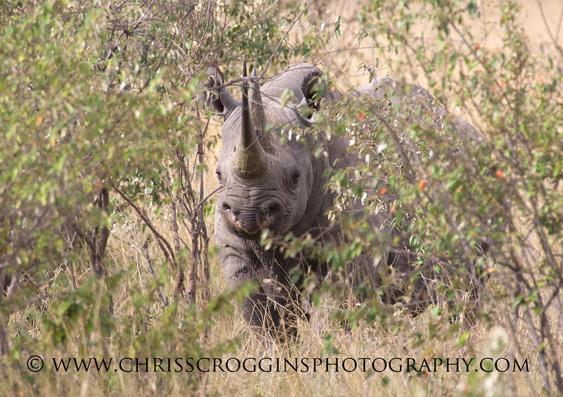 Black Rhino Kenya