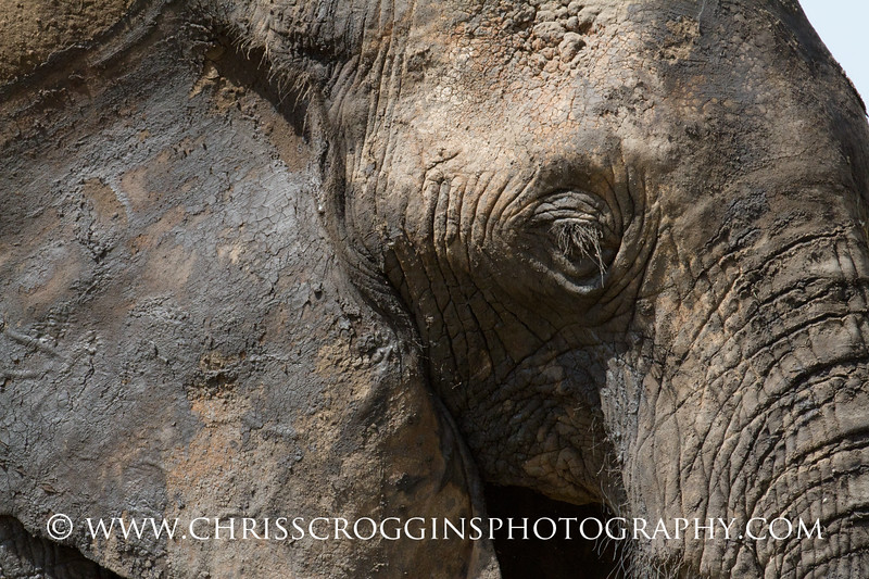 Elephants Prefer Mud