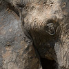 Elephants Prefer Mud