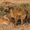 Spotted-Hyena Clan