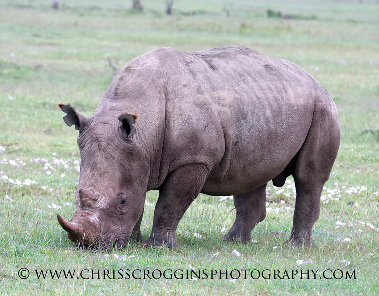 White Rhino Lake Nakuru