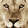 Hypno Lion