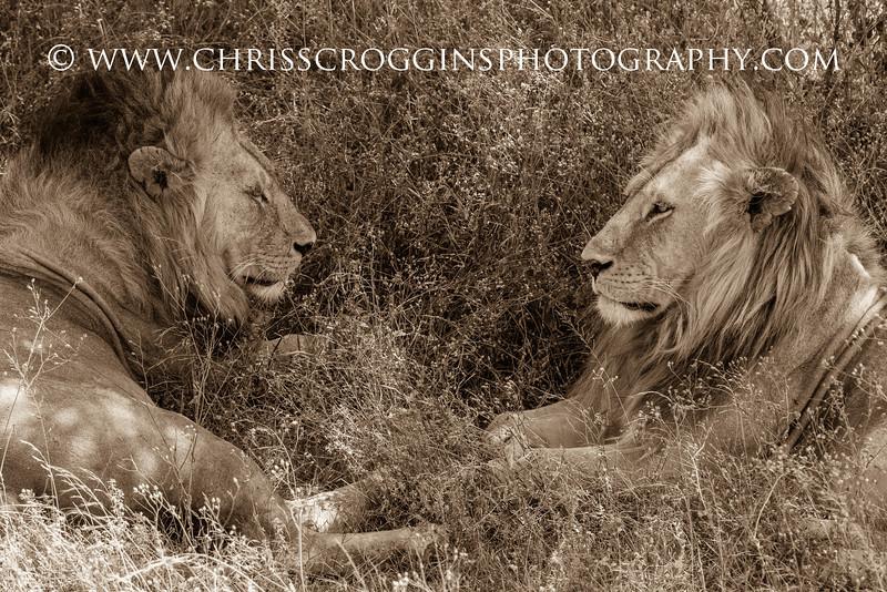 Lion Fellowship