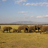 Elephant Herd Lake Manyara