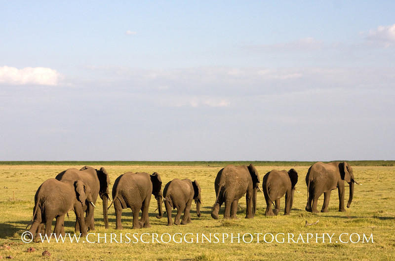 Elephant Herd Lake Manyara