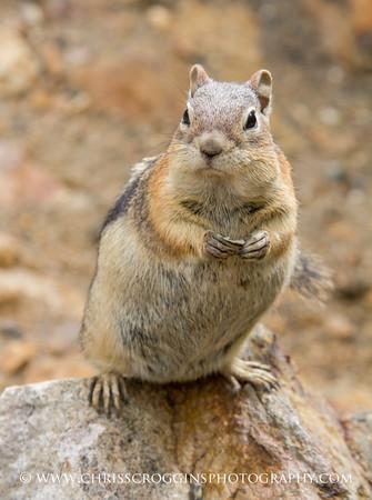 Grumpy Squirrel