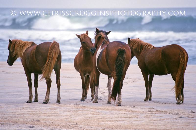 Pony Council