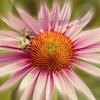 VIP Very Important Pollinator