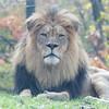 Lion CEO