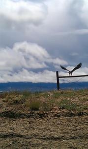 eagle2 (Large)