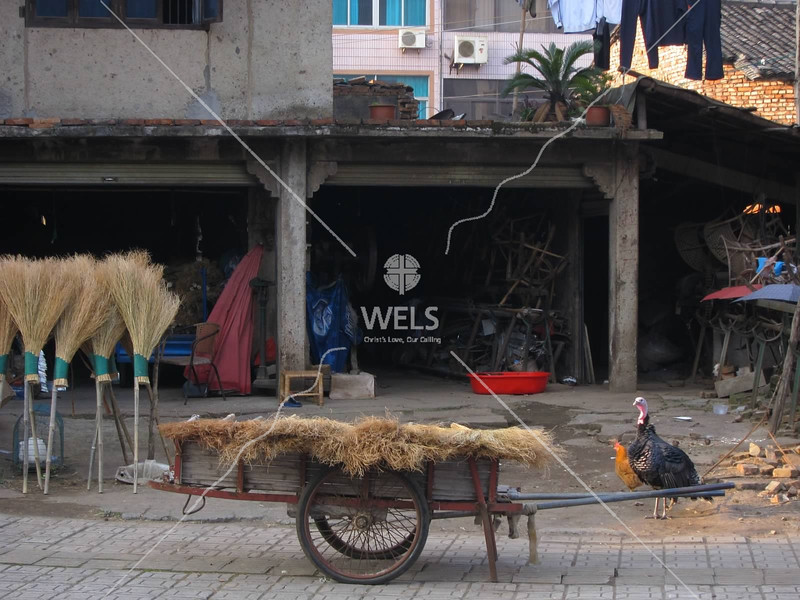 Broom vendor with tethered turkey, Wenling, Zhejiang Province, China by kstellick