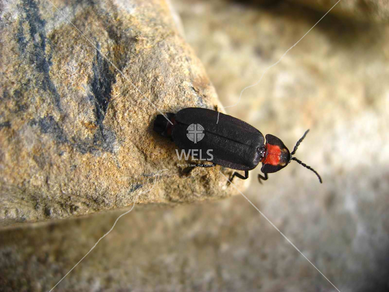 Red head bug on trail to Snow Mountain, Taiwan by kstellck