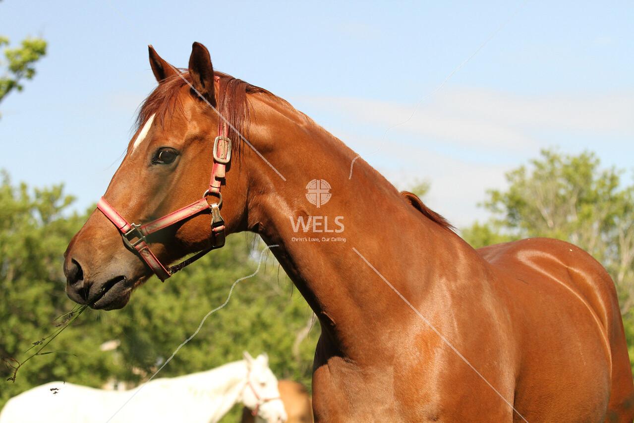 Horse by pthiele