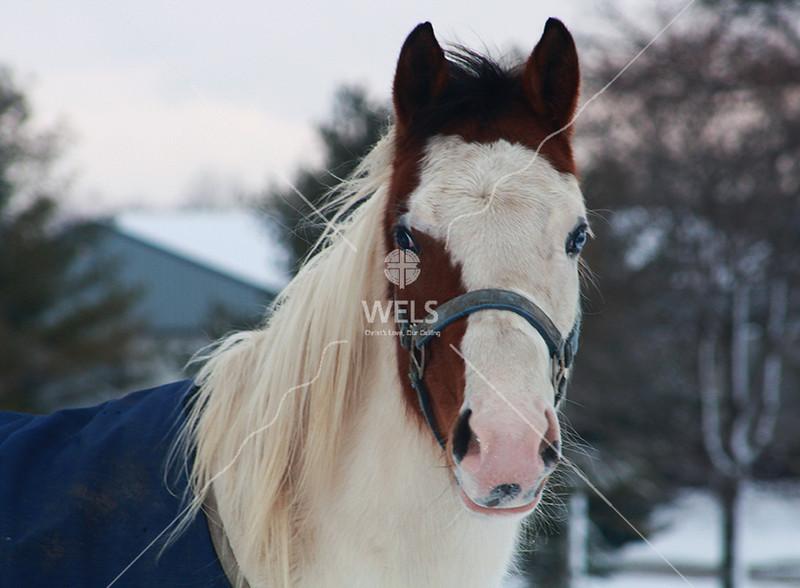 Horse named Muneca by jduran