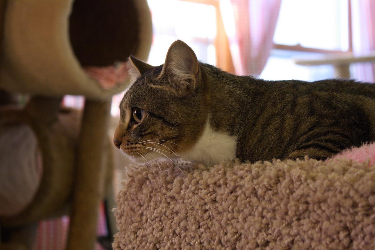 Cat in carpet