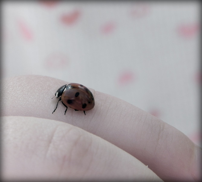 my daughter holding a beautiful ladybug