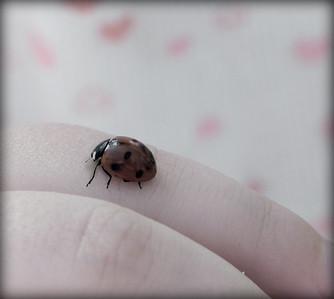 my daughter holding a beautiful ladybug