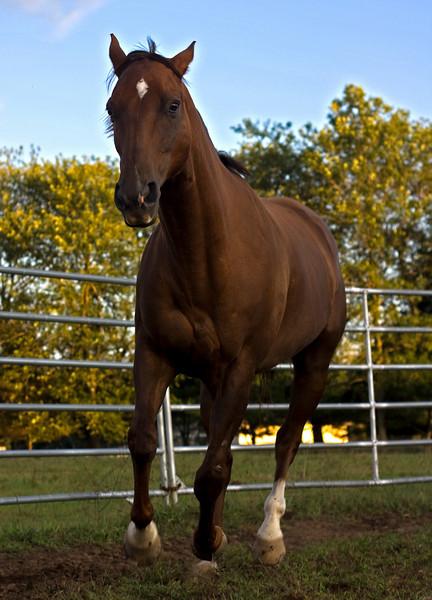Horse running in ring