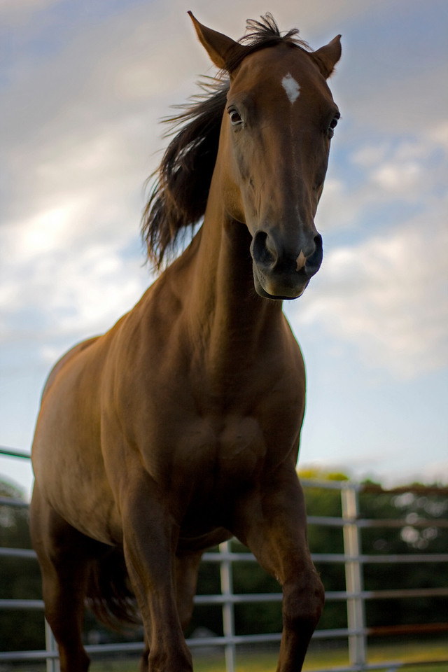 Horse Galloping in Ring