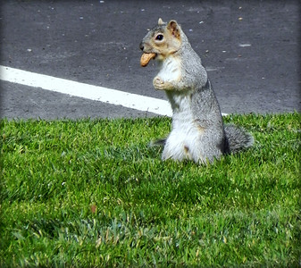 he sure loved his nuts