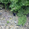 We were on the Fontana Dam looking down and saw this bear cub