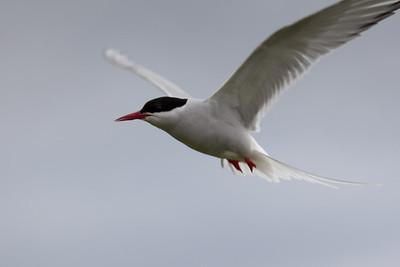 Arctic Turn in flight