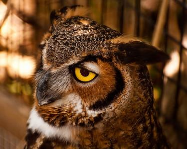 Key Largo Wild Bird Sanctuary