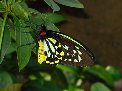 2012 _07_02 Omaha Zoo 16