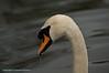 Birds 2009