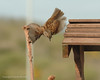 CornwallGarden Birds 2009