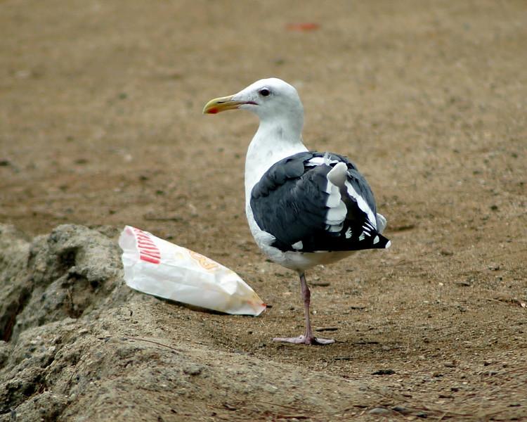 Solo Leg Seagull