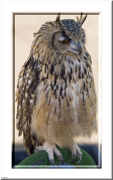 Owl taken locally