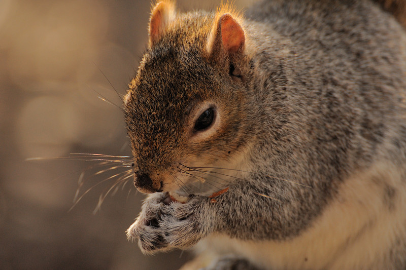 squirrel 2009