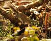 CornwallTehidy Woods 2009
