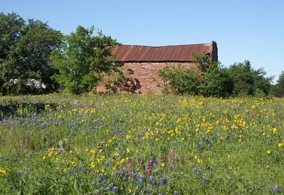Field of wildflowers in Chalk Mountain, TX.