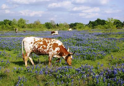 Near Ennis, TX
